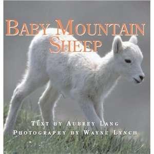 Baby Mountain Sheep (Nature Babies) (9781554550432