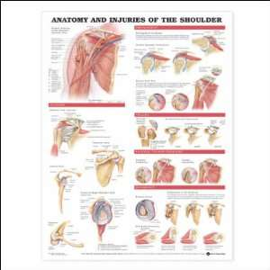 Anatomy and Injuries of the shoulder Anatomical Chart 20
