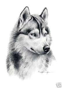 SIBERIAN HUSKY Drawing Dog Art ACEO Print Signed DJR