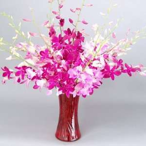 Long Stem Pink & Red Dendrobium Orchid Flowers Patio