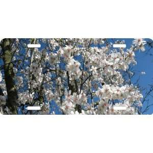 Rikki KnightTM Cherry Blossom Tree Branches Cool Novelty