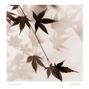 Japanese Maple Leaves No. 1: Home & Kitchen